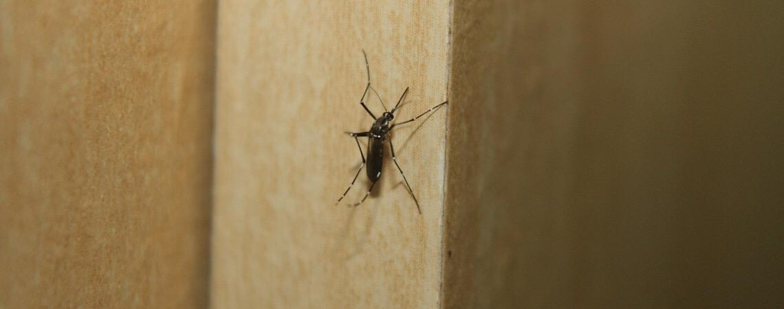 Tipo mais agressivo da dengue invade Brasília. Epidemia causou 16 mortes