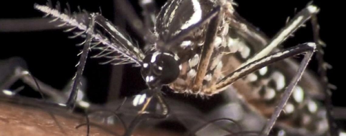 'Efeito dura 30 minutos'. Fumacê é considerado medida de baixa eficácia contra dengue