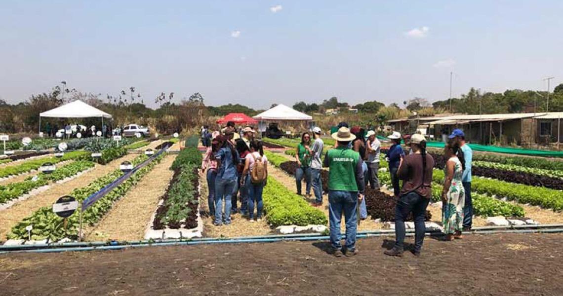 Emater-DF comemora 42 anos com crescimento na produção agropecuária