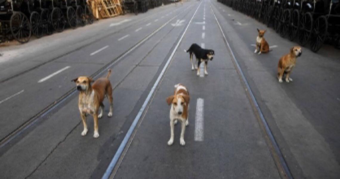 Na Índia confinada, os animais invadem as ruas