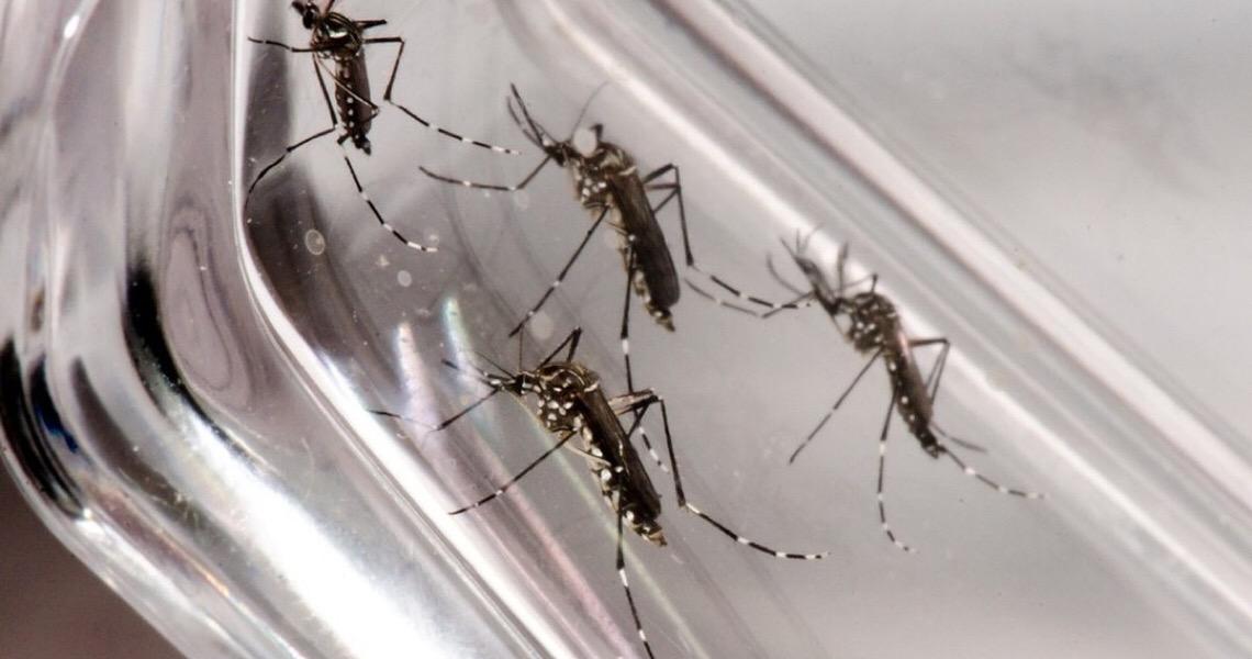 Dengue: Distrito Federal registra 16,2 mil casos e 8 mortes em 2020