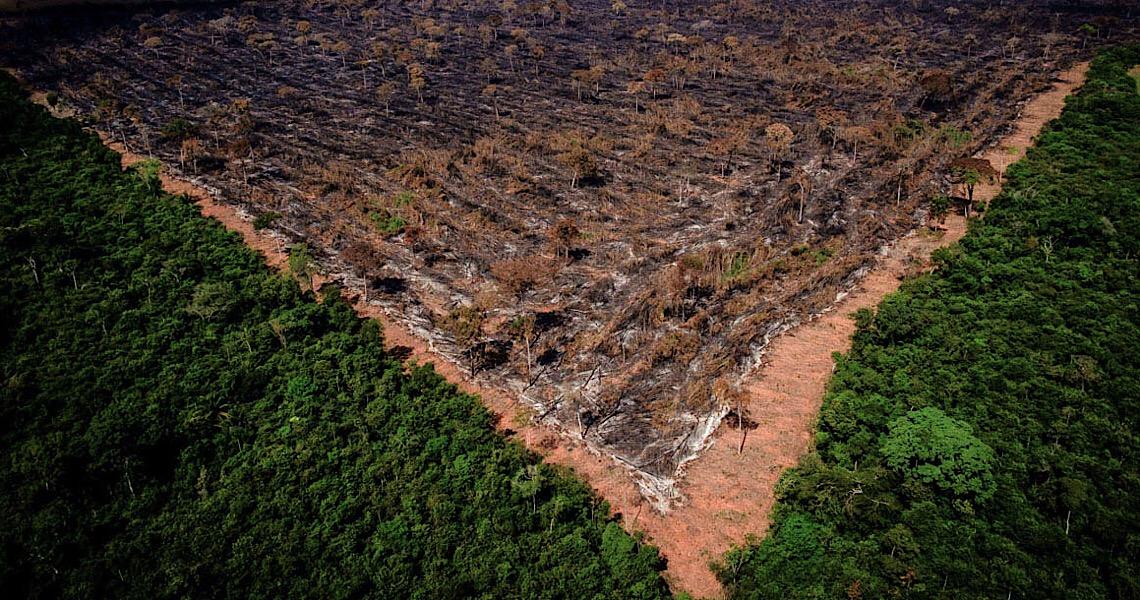 Coalizão de agro e ambientalistas envia carta a Maia e Alcolumbre contra 'MP da grilagem'