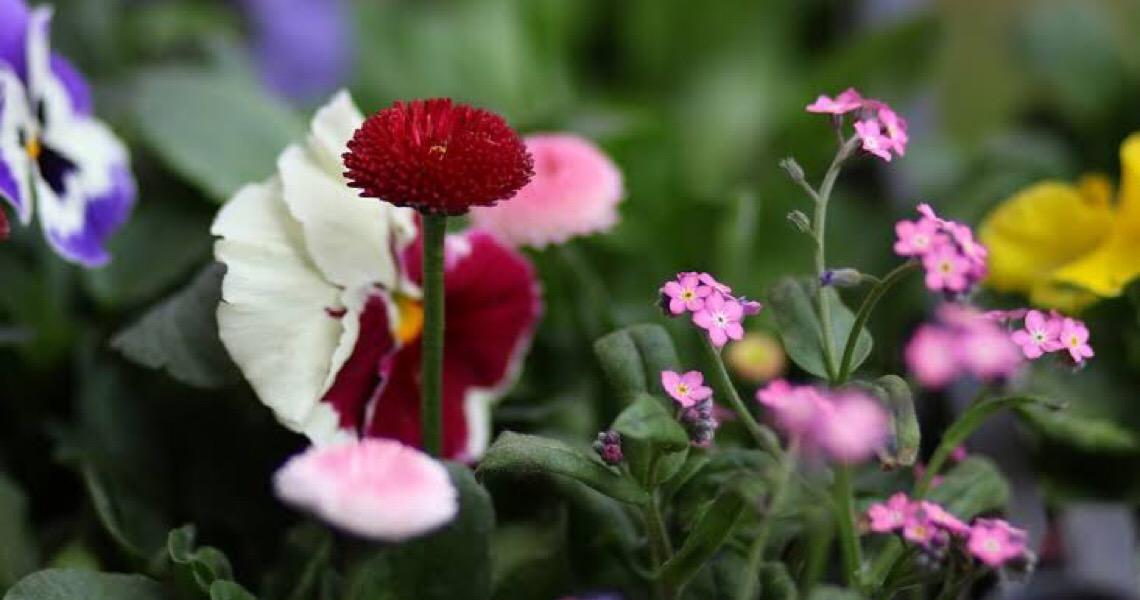 Com 90% das vendas paradas, produtores trituram flores estocadas