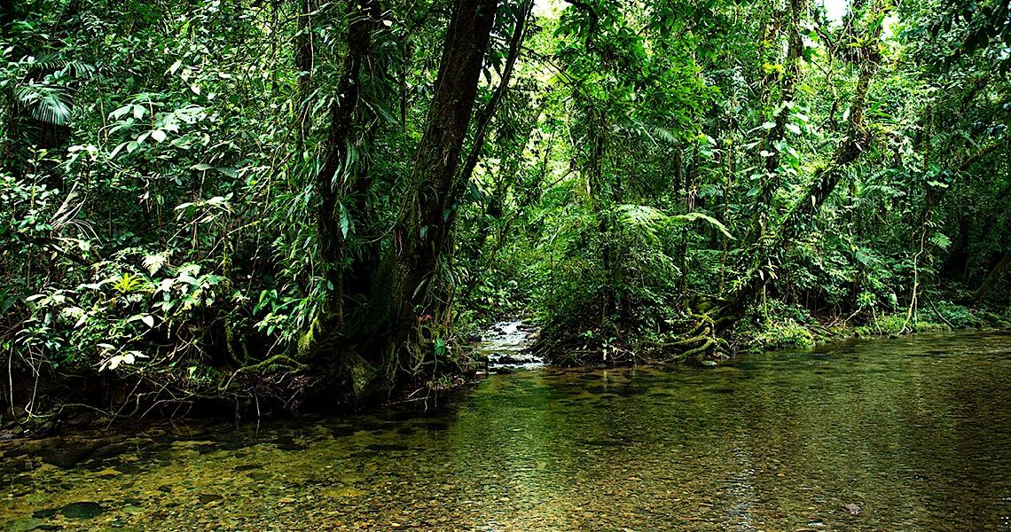 Mata Atlântica e Amazônia em risco durante a pandemia