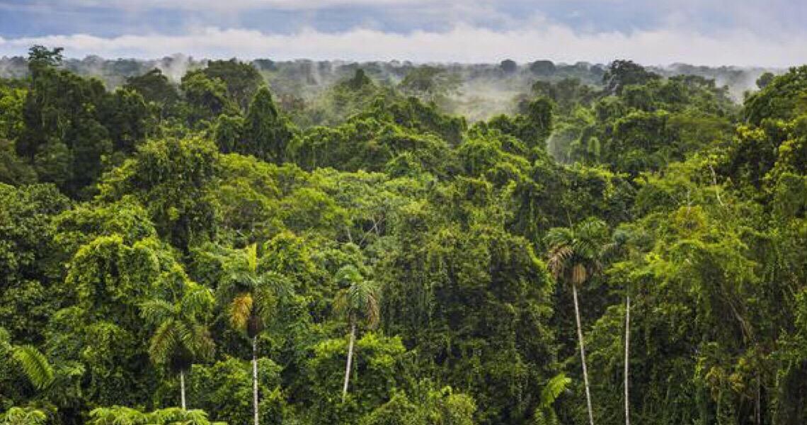 Como desenvolver a economia na Amazônia sem desmatar