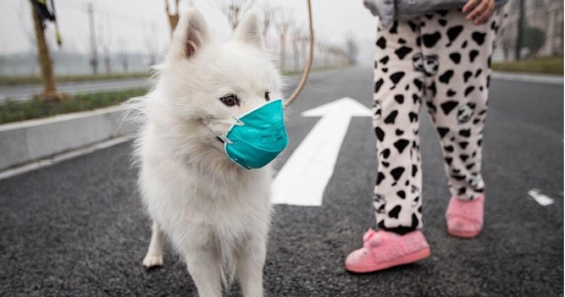 Como manter animais de estimação seguros da Covid-19?