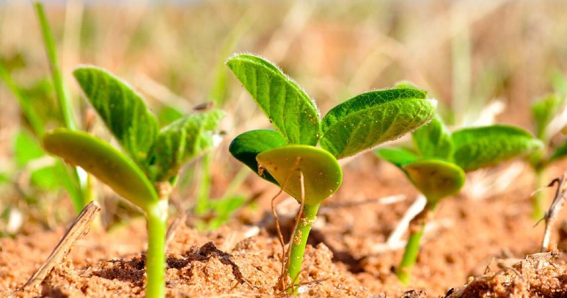 China teme falta de soja no país por causa do aumento da covid-19 no Brasil