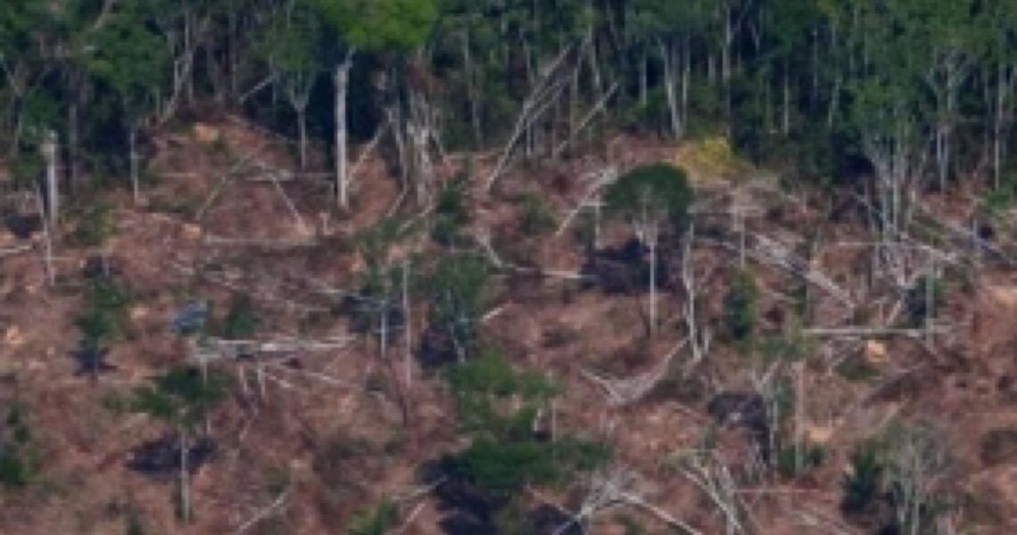 ONG Human Rights Watch acusa governo federal de sabotar ações do Ibama