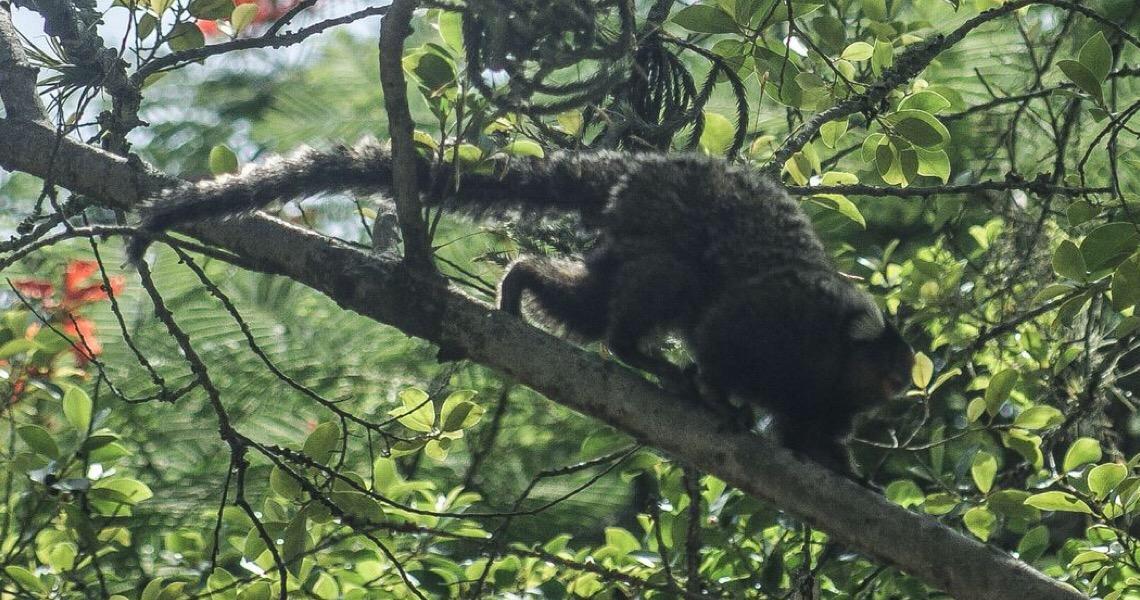 Febre amarela em macacos acende alerta sobre importância da vacina