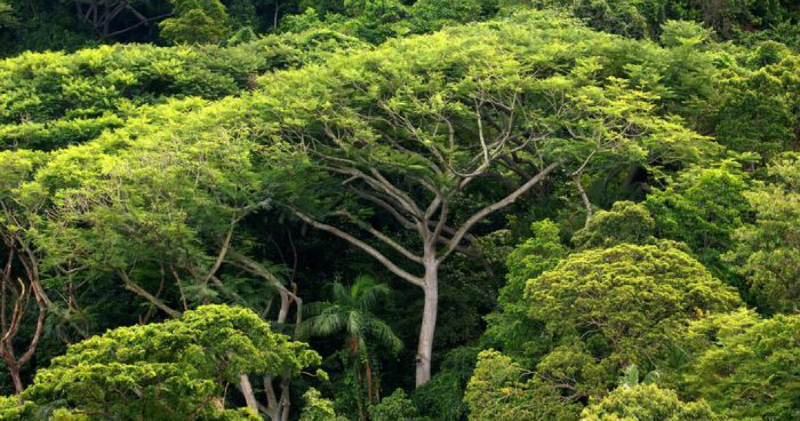 Bioma mais ameaçado do Brasil, Mata Atlântica vive alta do desmatamento