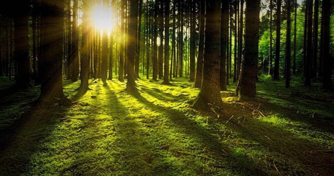 Com 10 milhões de hectares perdidos anualmente, é necessário proteger florestas para salvar a biodiversidade