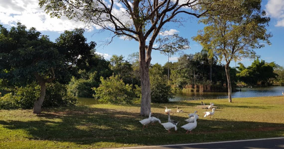 Brasília Ambiental prepara parques ecológicos para reabertura