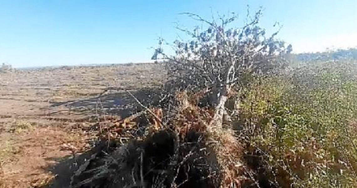 Mais de mil hectares devastados na Chapada dos Veadeiros