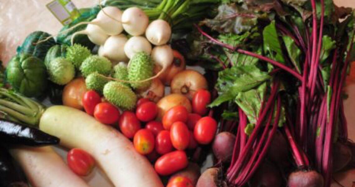 Selo de Boas Práticas Agropecuárias aumenta faturamento de produtores no Distrito Federal