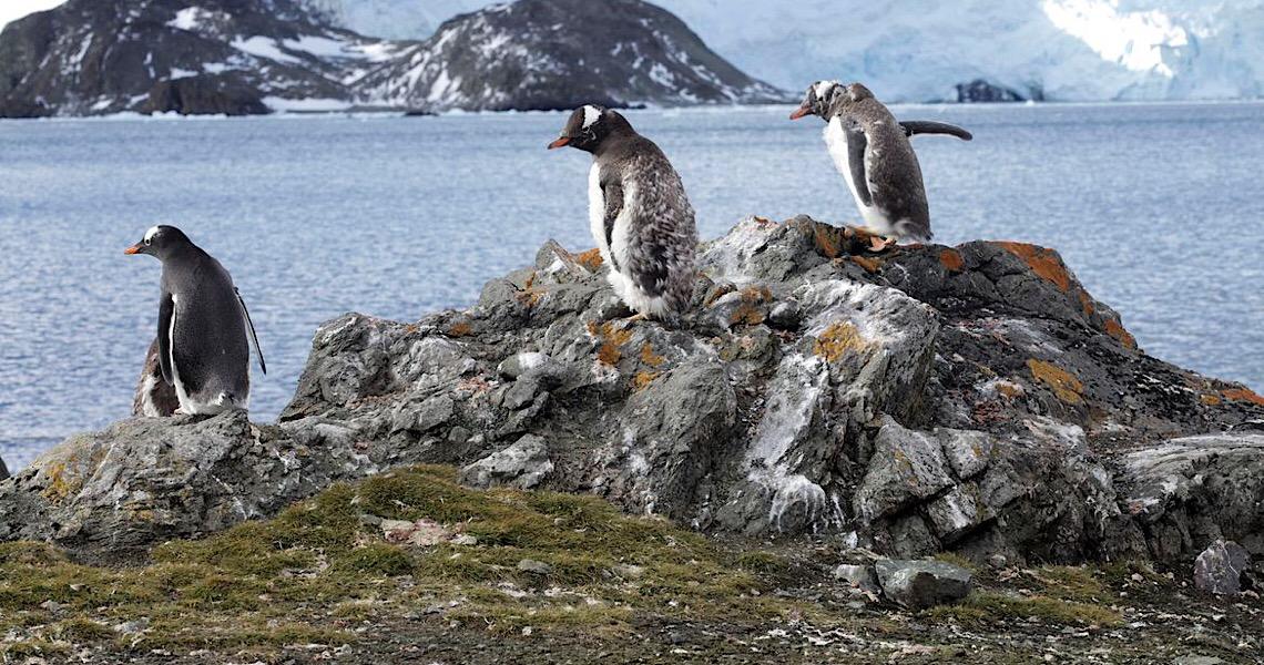 Polo Sul: Aquecimento foi três vezes a taxa global nos últimos 30 anos