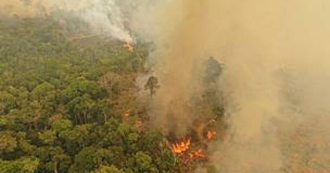 Queimada na Amazônia em junho é a maior dos últimos 13 anos