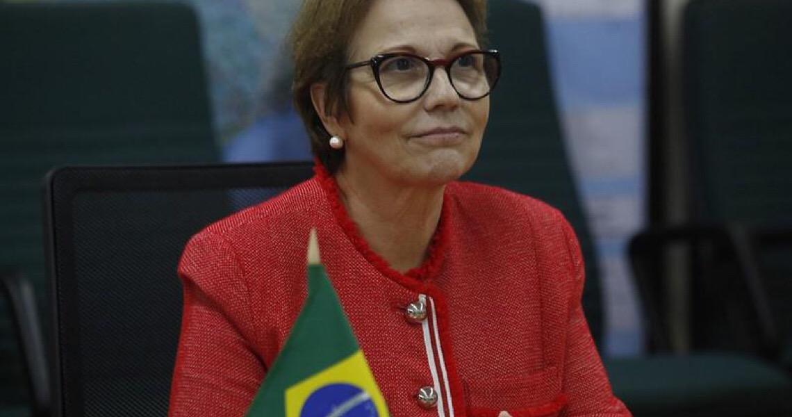 'Agronegócio não precisa da Amazônia': Ministra deve transformar palavras em ações, diz especialista