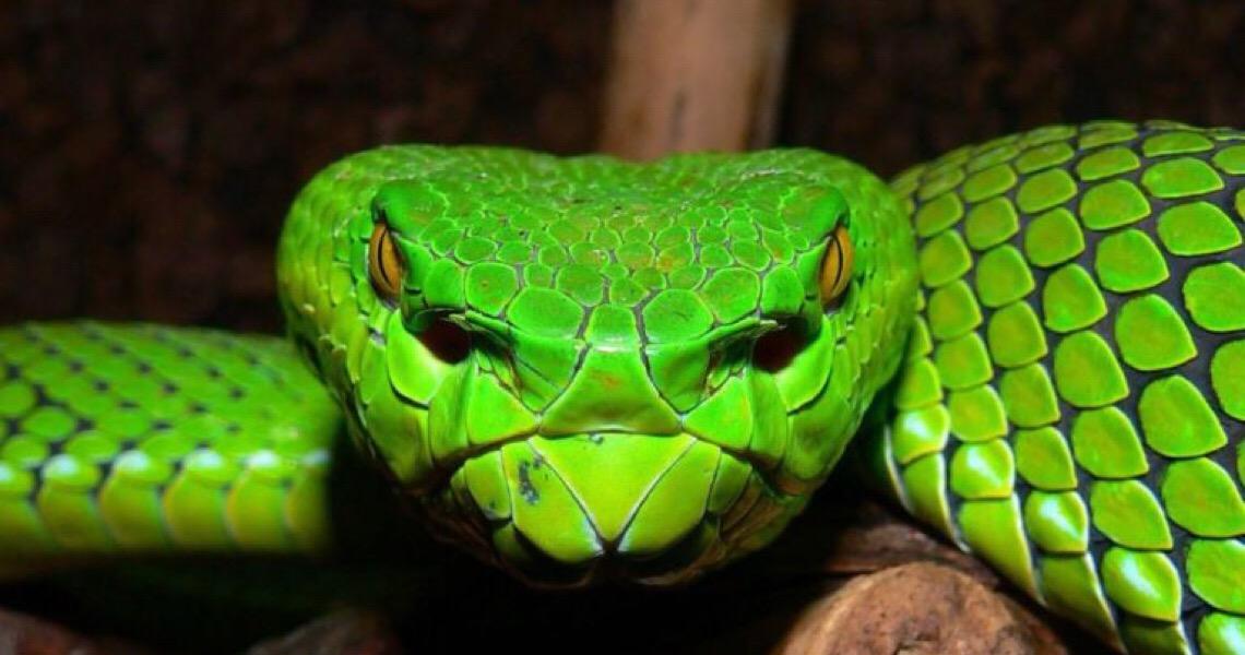Os rastros das cobras: Zoo de Brasília recebe mais 18 serpentes criadas ilegalmente