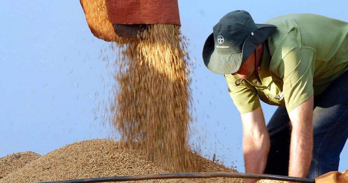 Brasil pode ser o maior produtor de soja do mundo na próxima década, diz OCDE