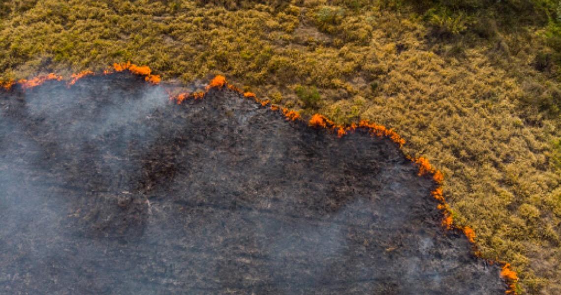 No Dia de Proteção às Florestas, a Amazônia pede socorro