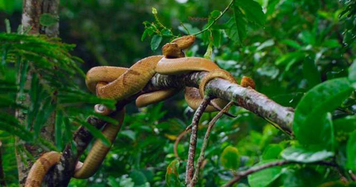 Dia da Cobra: Ilha brasileira tem 2ª maior concentração do animal no mundo