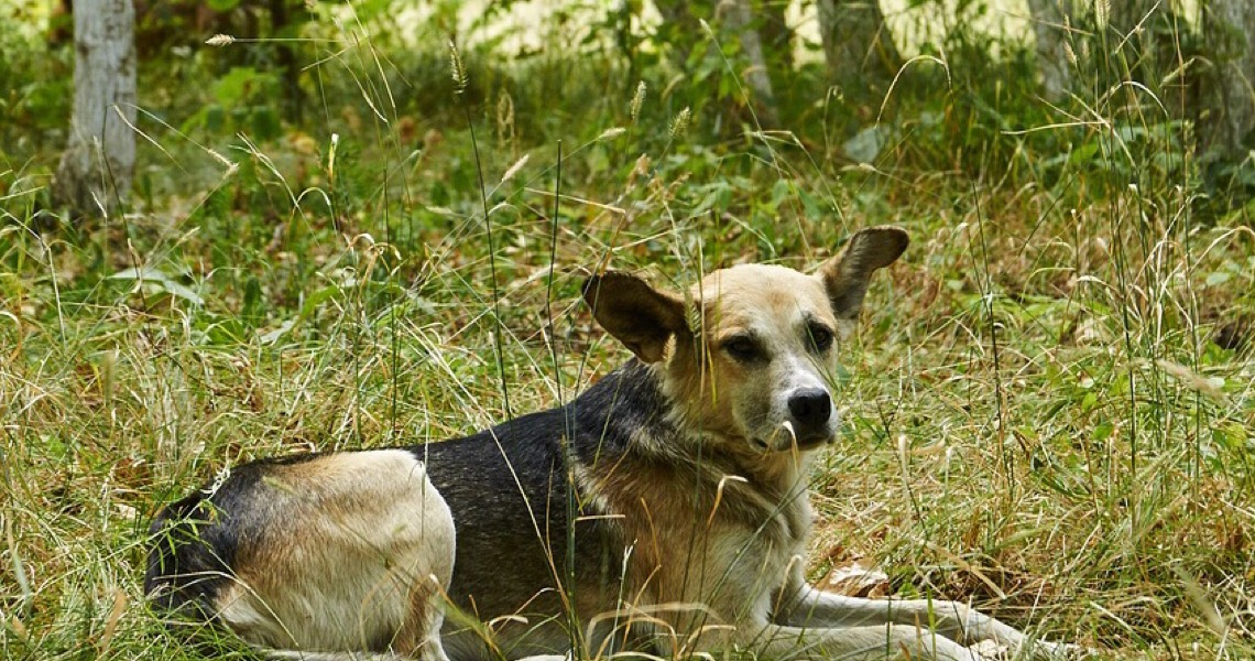 Animais abandonados aguardam sua solidariedade e o aconchego de uma família