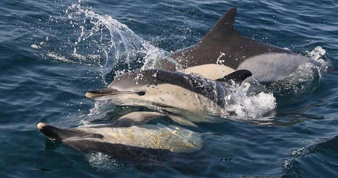 Golfinhos com agrotóxicos no cérebro, e outros contaminados por plástico