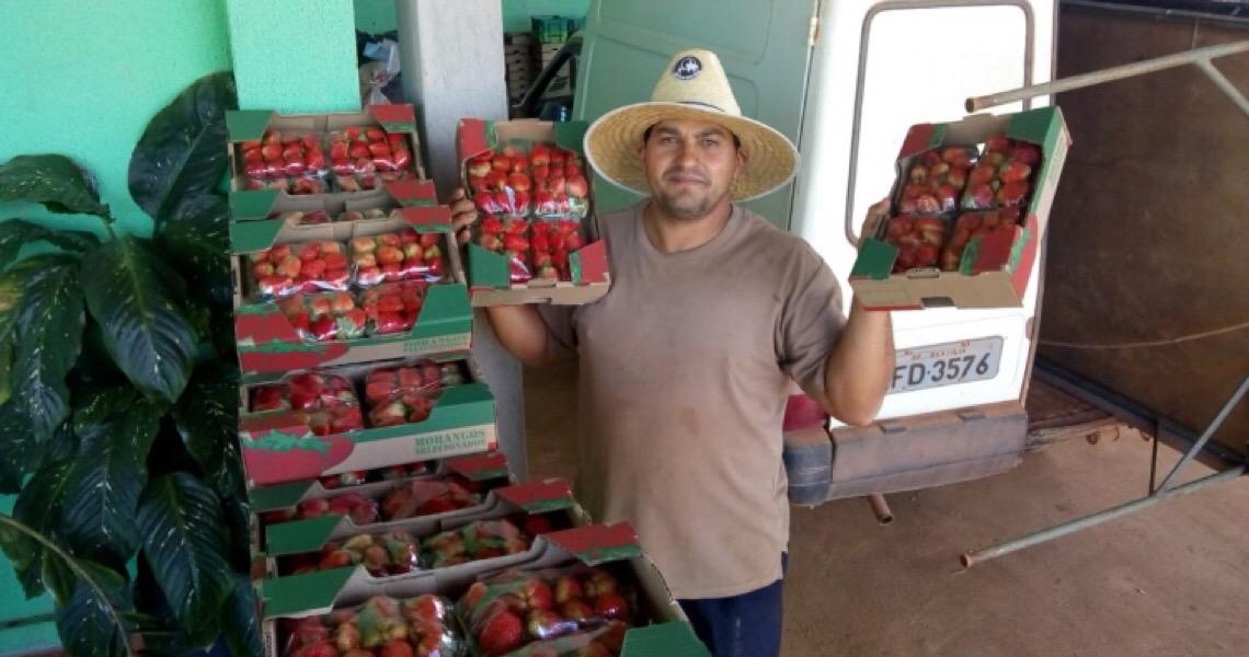 Produtores celebram saldo positivo em compras do Governo do DF
