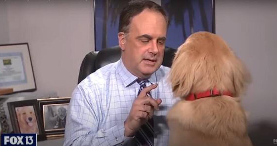 Pets fazem participações especiais em lives durante quarentena