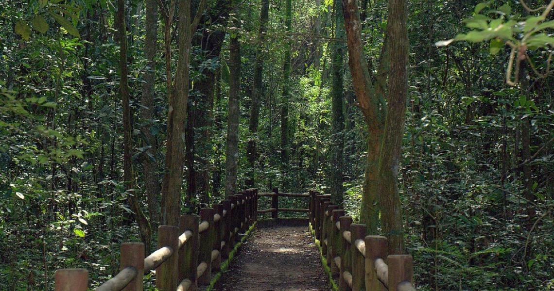 Floresta Nacional de Brasília será concedida à iniciativa privada junto com Parque Nacional