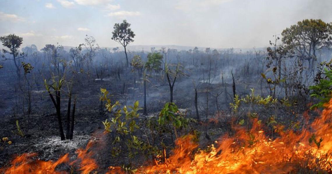 """Governo brasileiro usa """"maquiagem verde"""" para desmentir o desmatamento da Amazônia"""