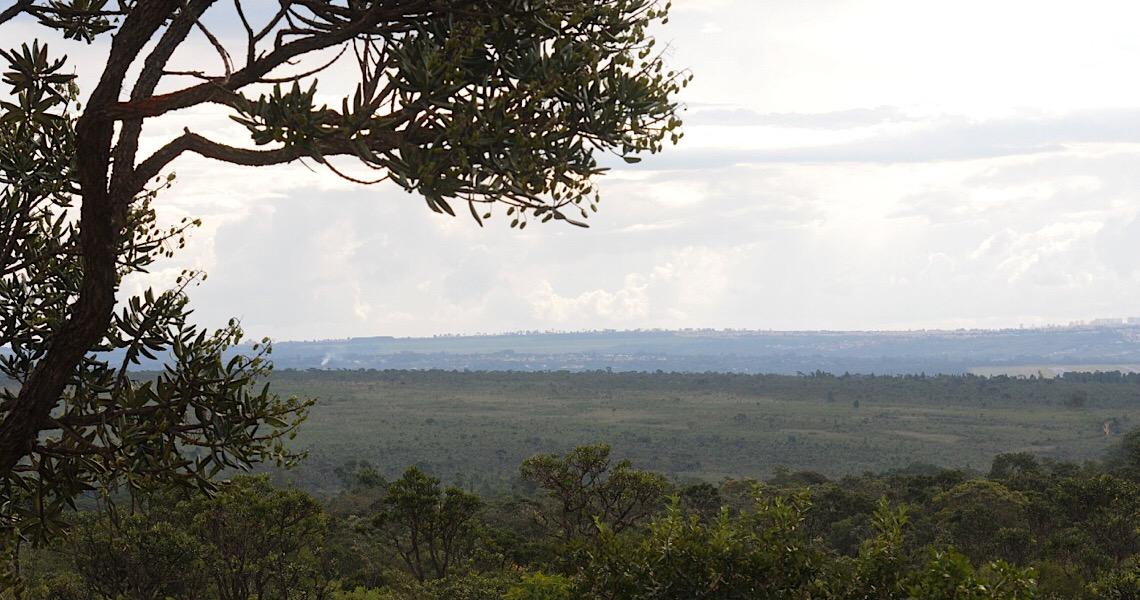 Comitê acompanhará preservação do Cerrado