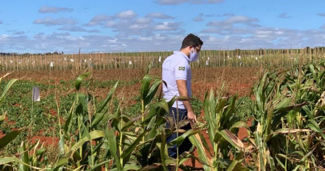 Vazio sanitário da soja no DF: fiscalização só notifica oito produtores