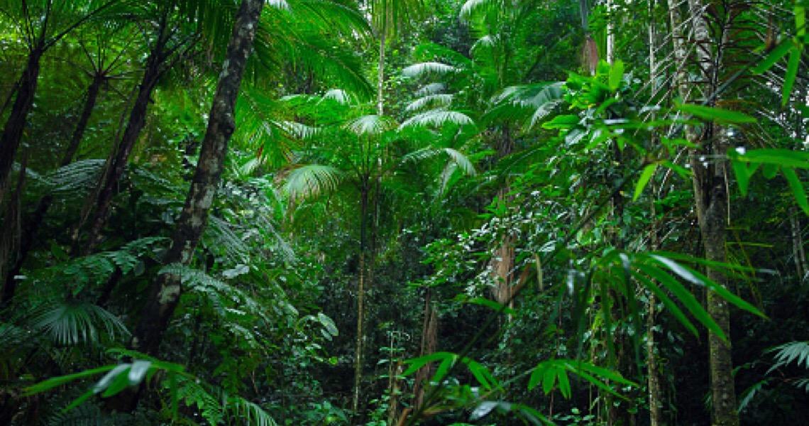 Mourão divulga dados de desmatamento da Amazônia e diz que houve queda em julho