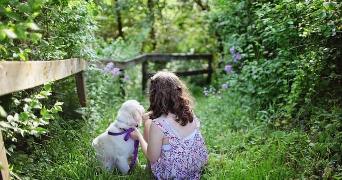 Adoção de animais: Todos os passos para adotar cachorros e gatos