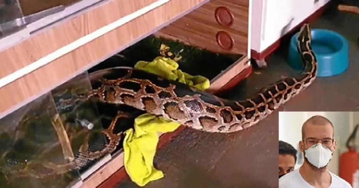Tráfico de cobras tinha até rifa em faculdade. Pena de até 30 anos de prisão