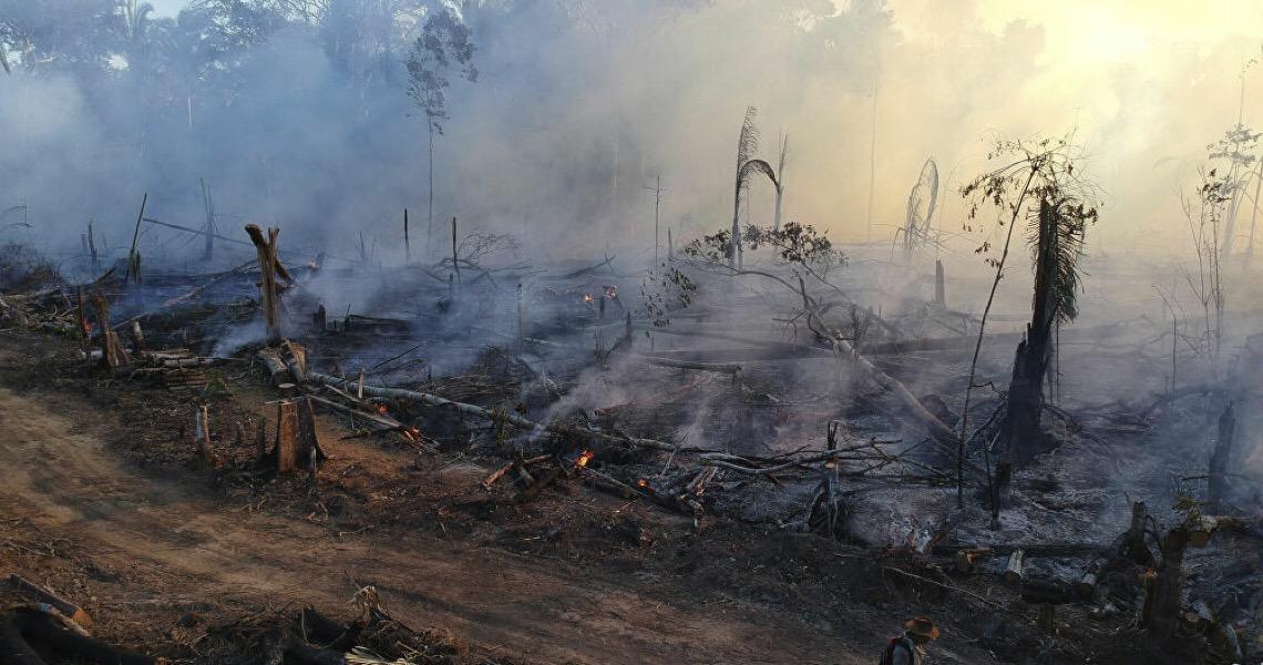 Principais problemas do Fundo Amazônia são má governança e aumento do desmatamento, diz especialista