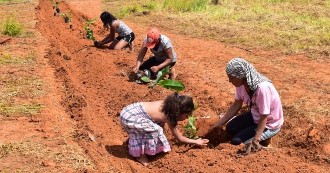 Sistemas agroflorestais no DF geram renda; protegem solo e mananciais