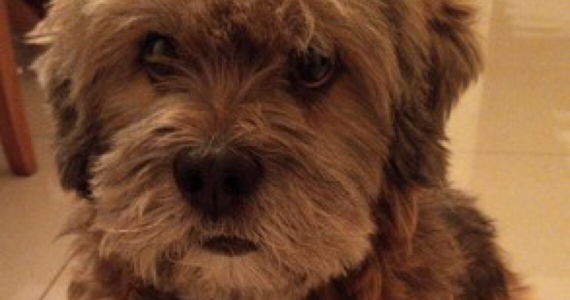Em Belo Horizonte, cachorrinho mpede invasão de casa durante aula ao vivo de professora