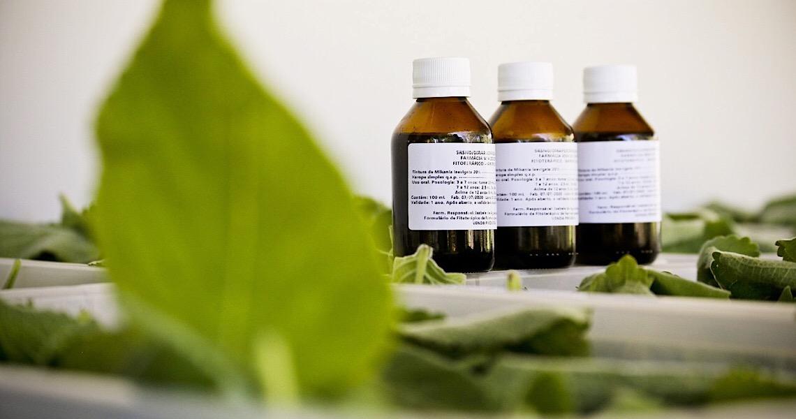 A importância da Farmácia Viva na produção de fitoterápicos no Distrito Federal