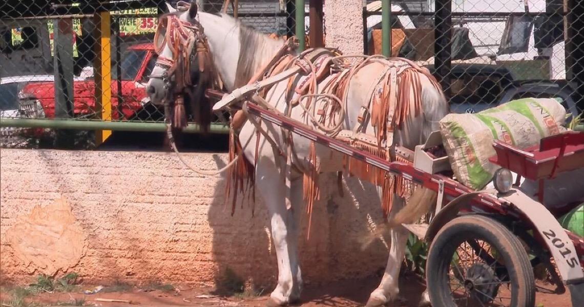 Projeto do Governo do DF prevê abate de animais apreendidos na rua