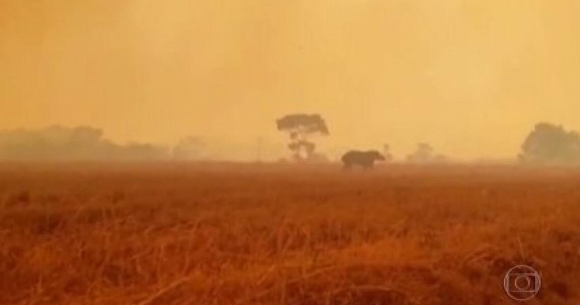 Mais de 6,9 mil hectares do bioma foram queimados no DF até agosto