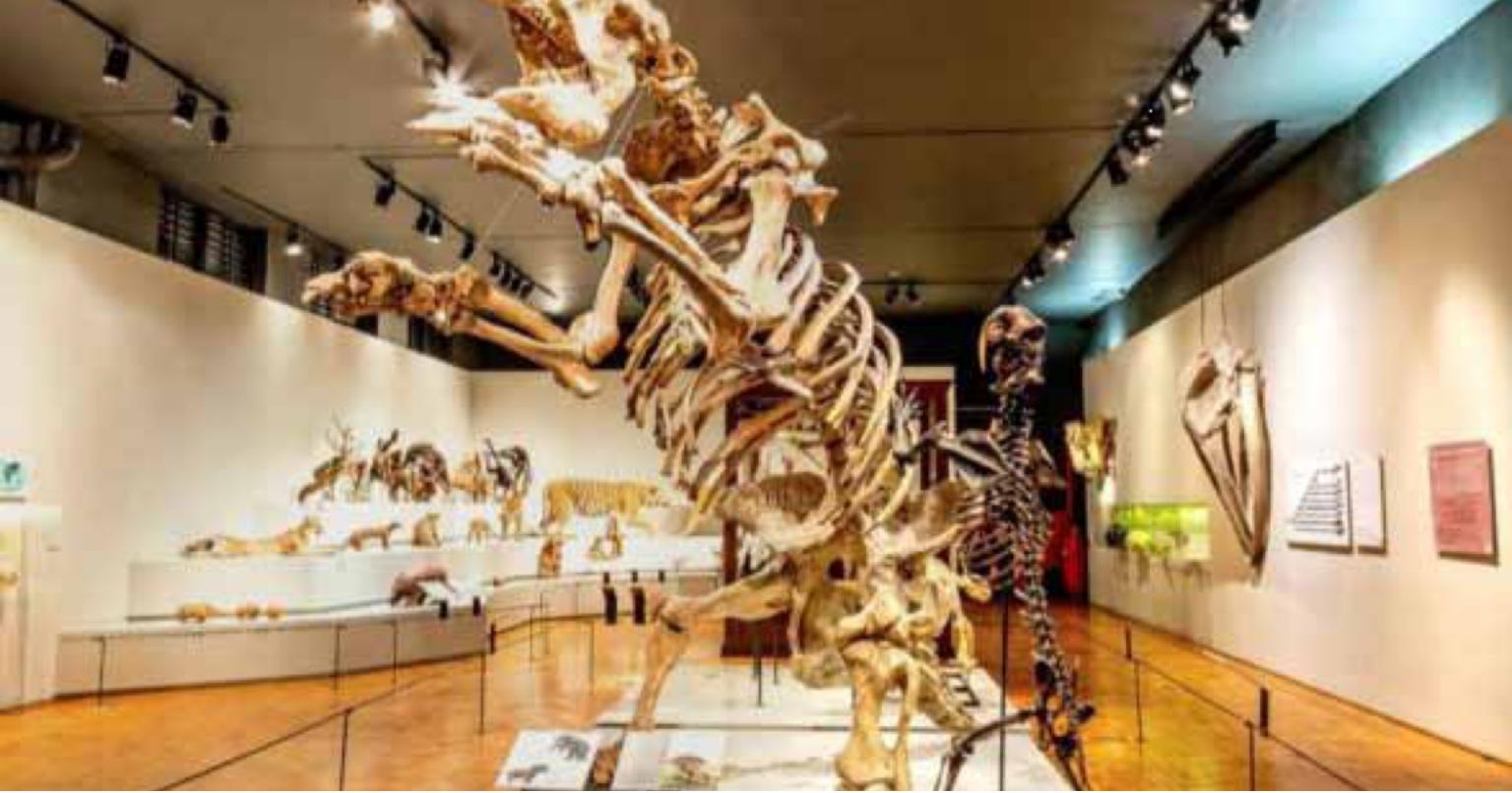 Museu virtual da lusofonia no 'Google Arts & Culture' com 45 exposições sobre os países de língua portuguesa