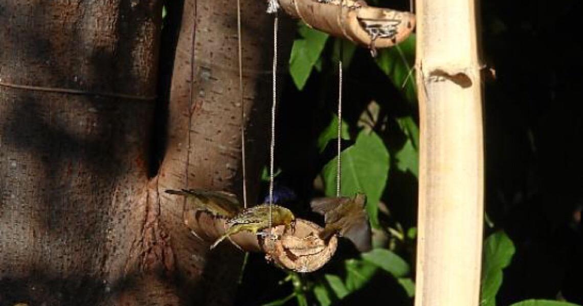 Pássaros, meus visitantes. Saiba como alimentar os bichinhos