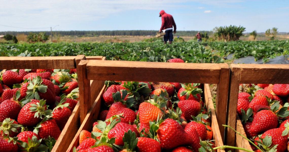 Convênio entre Emater e Ministério da Agricultura vai permitir melhor assistência aos agricultores do DF