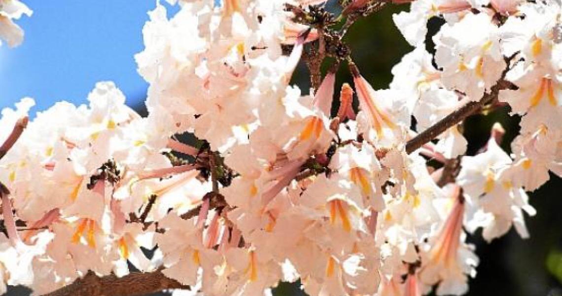 A primavera de alto-astral. Atitude primaveril