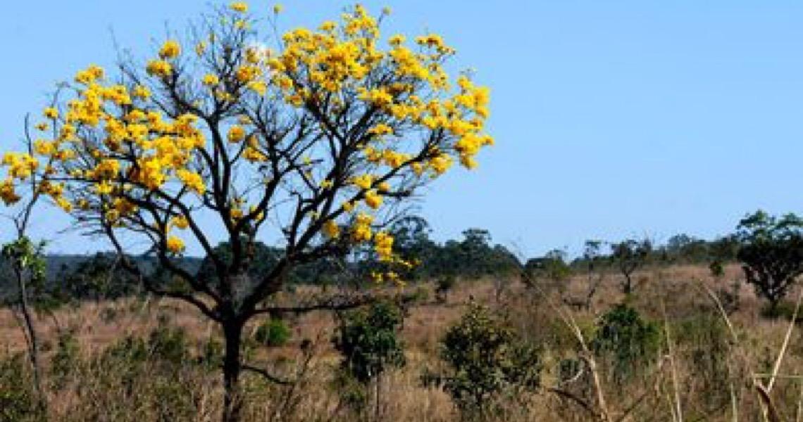Segundo o IBGE, áreas de biomas brasileiros caíram 8,34% entre 2000 e 2018