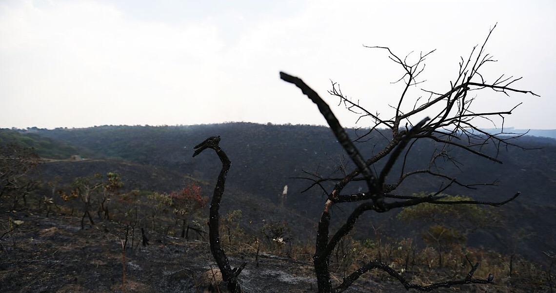 Força-tarefa cobra R$ 893 milhões de desmatadores da Amazônia