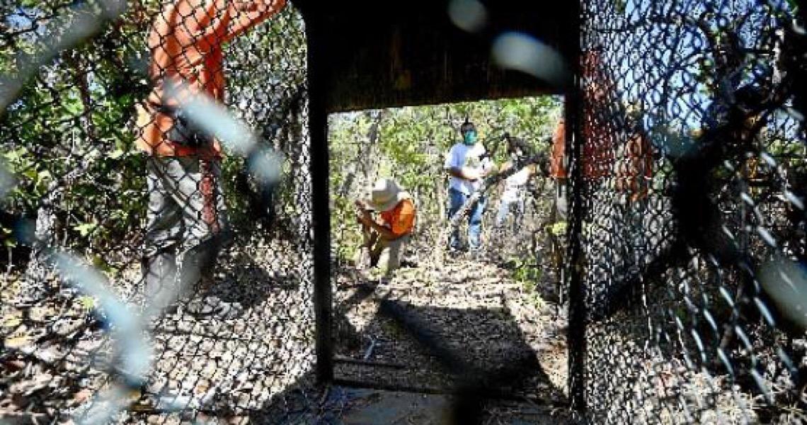 Travessia segura para animais silvestres no Distrito Federal