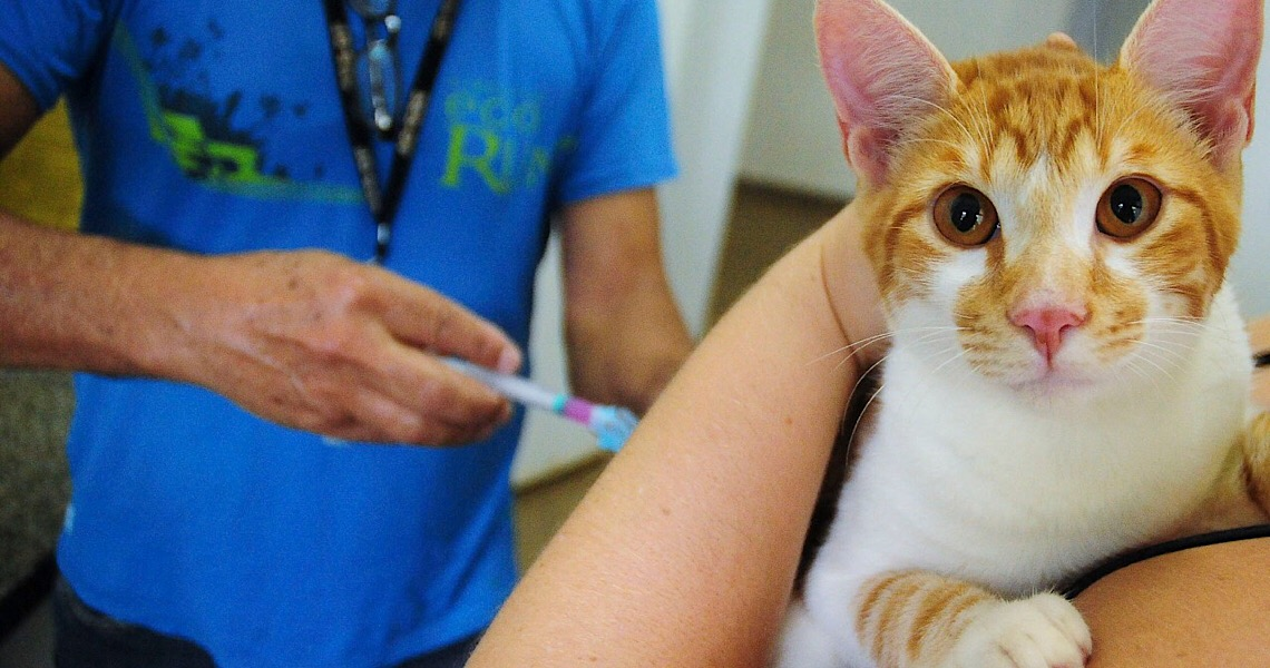 Vem aí a campanha de vacinação antirrábica no Distrito Federal